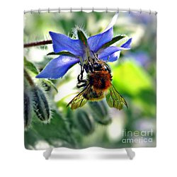 Bee On Borage Shower Curtain
