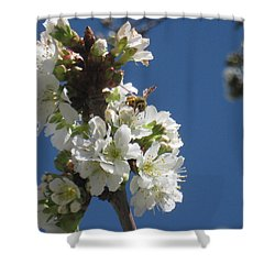 Bee On Cherry Blossoms Shower Curtain