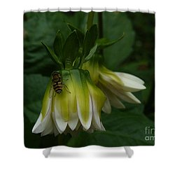 Shower Curtain featuring the photograph Bee On Flower by Jane Ford