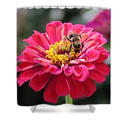 Shower Curtain featuring the photograph Bee On Pink Flower by Cynthia Guinn