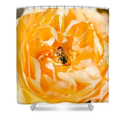 Bee Pollinating A Yellow Rose, Beverly Shower Curtain