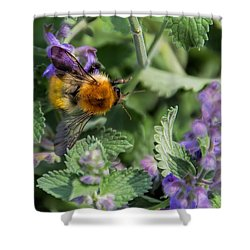 Shower Curtain featuring the photograph Bee Too by David Gleeson