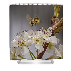 Bee Working The Bradford Pear 2 Shower Curtain