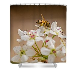 Bee Working The Bradford Pear 4 Shower Curtain