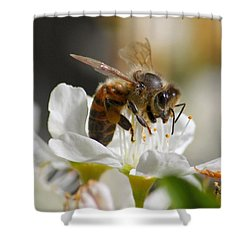 Shower Curtain featuring the photograph Bee4honey by Patrick Witz
