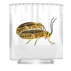 Chrysomelid Beetle Mating Pose Shower Curtain by Cindy Hitchcock