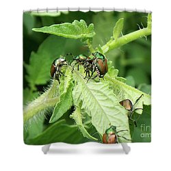 Shower Curtain featuring the photograph Beetle Posse by Thomas Woolworth