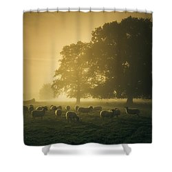 Before Dawn Gathering Shower Curtain by Chris Fletcher