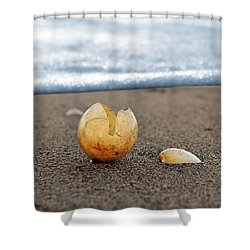 Beginnings Shower Curtain by Laura Fasulo