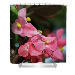 Begonia Beauty Shower Curtain by Ed  Riche