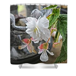 Begonia Shower Curtain by Denise Romano
