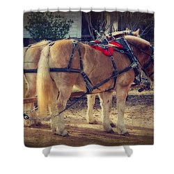 Belgium Draft Horses Shower Curtain by Charles Beeler