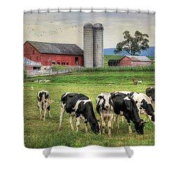 Belleville Cows Shower Curtain by Lori Deiter