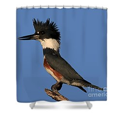 Belted Kingfisher Shower Curtain