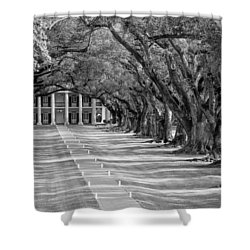 Beneath Live Oaks Bw Shower Curtain by Steve Harrington