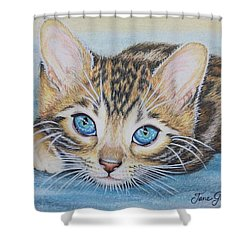 Bengal Kitten Shower Curtain by Jane Girardot