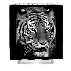 Bengal Tiger In Black And White Shower Curtain by Venetia Featherstone-Witty