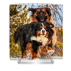 Bernese Mountain Dog And Leonberger Winter Fun Shower Curtain