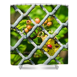 Berries And The City - Featured 3 Shower Curtain by Alexander Senin
