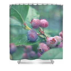 Shower Curtain featuring the photograph Berries For You by Rachel Mirror
