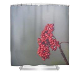 Berries In Fog Shower Curtain by Dan Friend