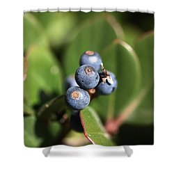 Berries Of Blue Shower Curtain by Joy Watson