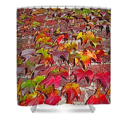 Berries Vines And Brick Shower Curtain by Barbara McDevitt