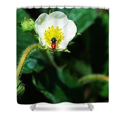 #berry Shower Curtain by Becky Furgason