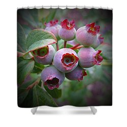Berry Unripe Shower Curtain by MTBobbins Photography
