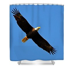 Best Bald Eagle On Blue Shower Curtain by Jeff at JSJ Photography