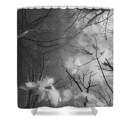 Between Black And White-02 Shower Curtain