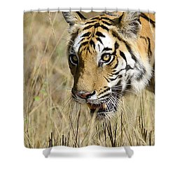 Beware Shower Curtain by Fotosas Photography
