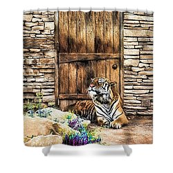 Beware Of House Cat Beautiful Tiger Shower Curtain by Tracie Kaska