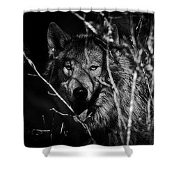 Beware The Woods Shower Curtain