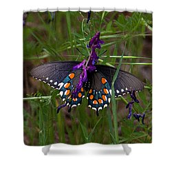 Bfly Shower Curtain