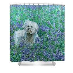 Bichon In The Bluebonnets Shower Curtain