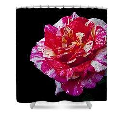 Shower Curtain featuring the photograph Bicolour Beauty by Doug Norkum