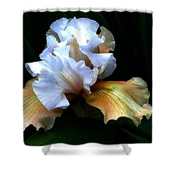 Bifocal Shower Curtain by Doug Norkum