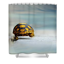 Big Big World Shower Curtain by Laura Fasulo