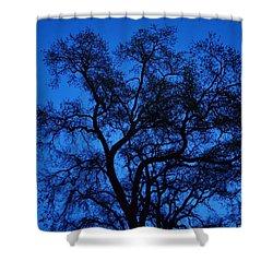 Big Blue Sky Oak Shower Curtain