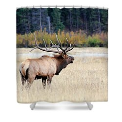 Big Colorado Bull Shower Curtain