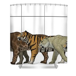 Big Felines Size Chart Shower Curtain by Vitor Silva