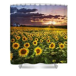 Big Field Of Sunflowers Shower Curtain by Debra and Dave Vanderlaan