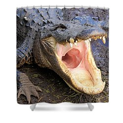 Big Mouth Shower Curtain by Adam Jewell