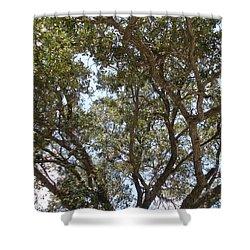 Big Oak Tree Shower Curtain