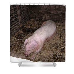 Big Pig Shower Curtain