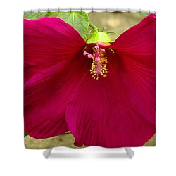 Shower Curtain featuring the photograph Big Red Hibiscus Bloom by James C Thomas