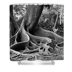 Big Roots Shower Curtain