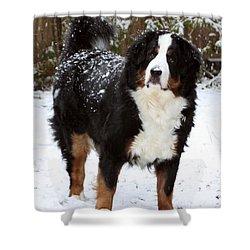 Snow Happy Shower Curtain by Patti Whitten