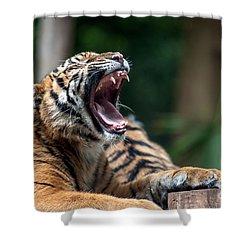 Big Yawn Shower Curtain by Ray Warren